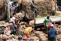 US rejects Ghana's yam in spite of AGOA