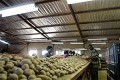 US-Zambia agricultural trade drops in 2014