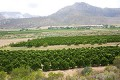 South African citrus set for early US arrival
