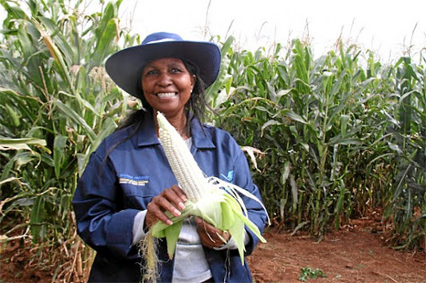 South Africa: Western Cape an exception amid signs of recovery in agriculture