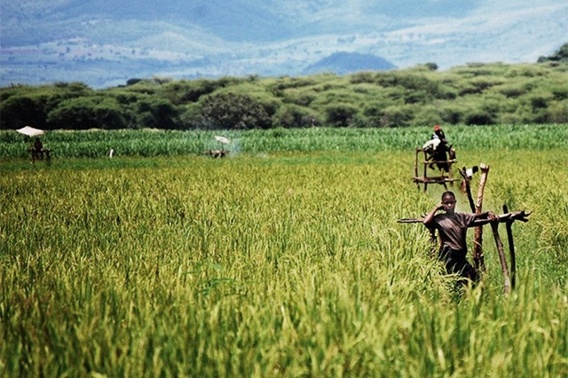 AGOA - Nigeria's agricultural exports very small - US - Agoa