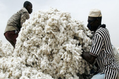 Nigeria and the benefits of reviving cotton sector
