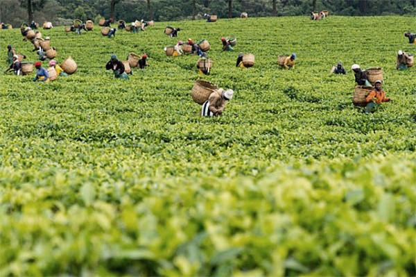 Kenya exports to US climb to Sh67 billion