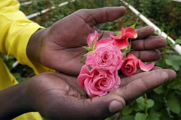 Kenyan VP Urges Flower Producers to Exploit AGOA