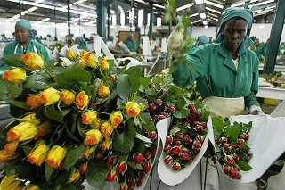 Uganda: First Flower Crop Enters US Market