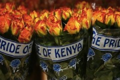 Tough US quality checks lock out Kenya flowers