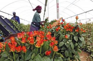 Growing Kenya economy hinges on renewal of US trade pact