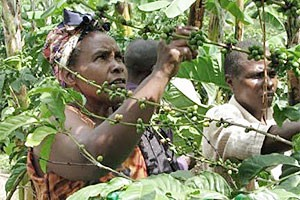 Should AGOA be expanded to include [more] agricultural products?