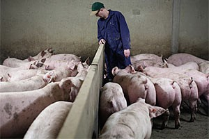 US pork council NPPC raises concerns about access to South Africa