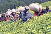 Rwanda: Exporters urged to take advantage of AGOA